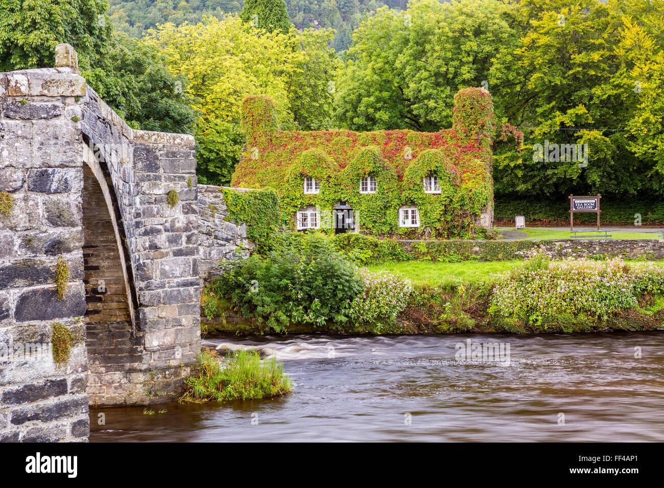 Siglo xvii puente de piedra sobre el río Conwy en Llanrwst, con Tu Hwnt revestidos de hiedra i'r Bont National Imagen De Stock