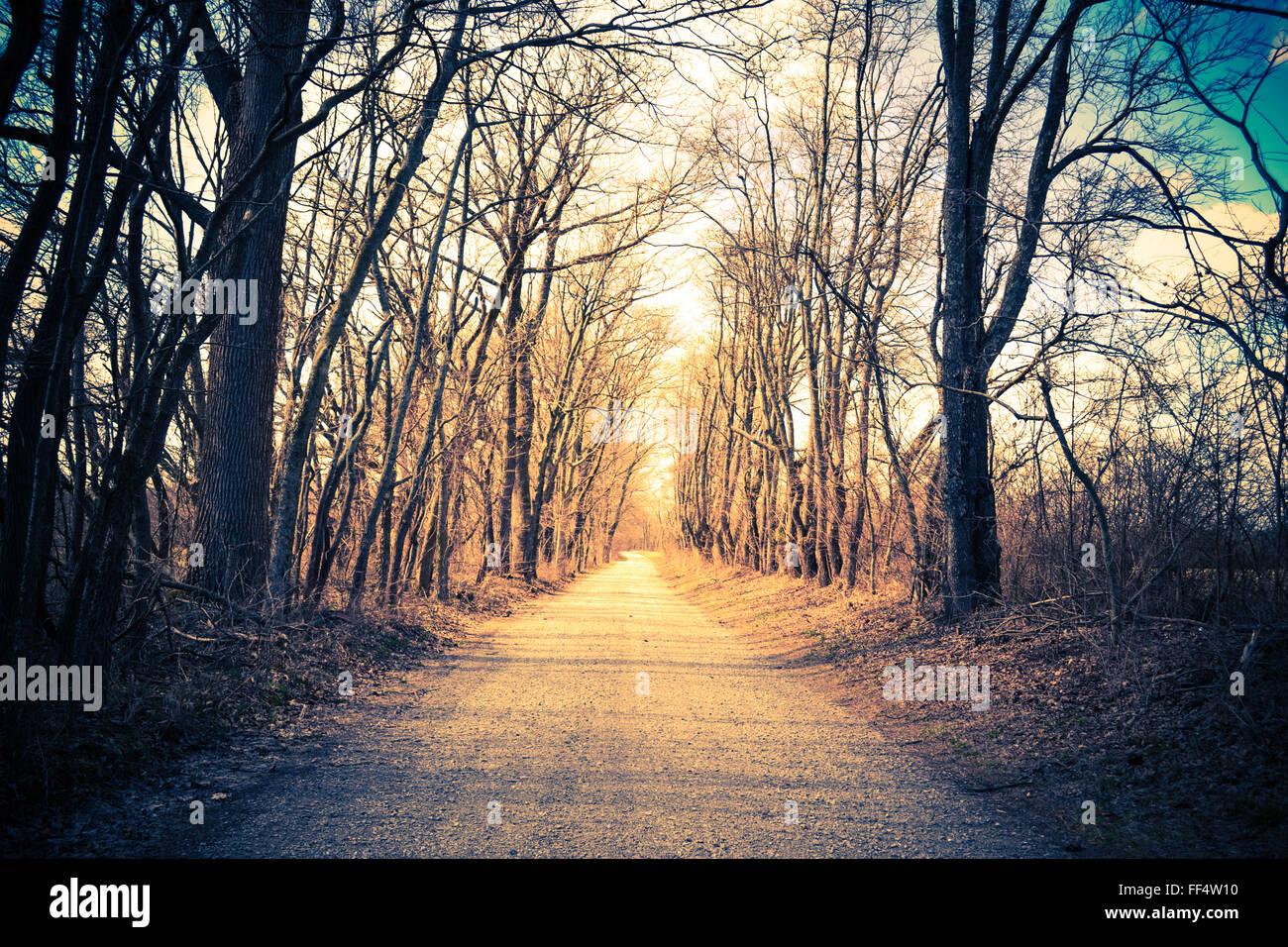 Gravilla arbolada country road. Vintage, retro. Ruta o dirección de concepto. Imagen De Stock
