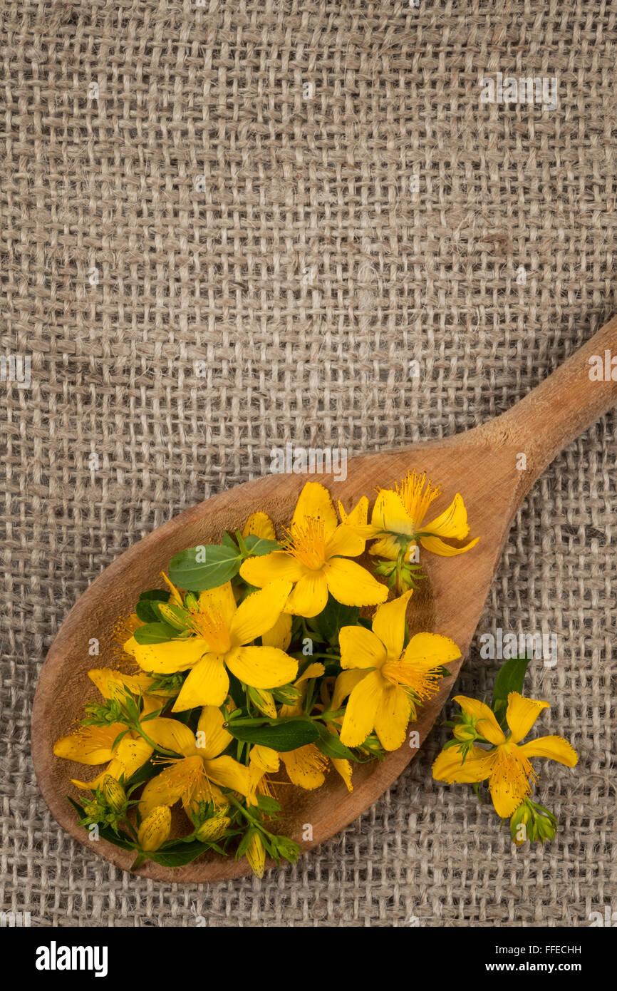 Flores Amarillas Frescas De Plantas Medicinales De La Hierba De San