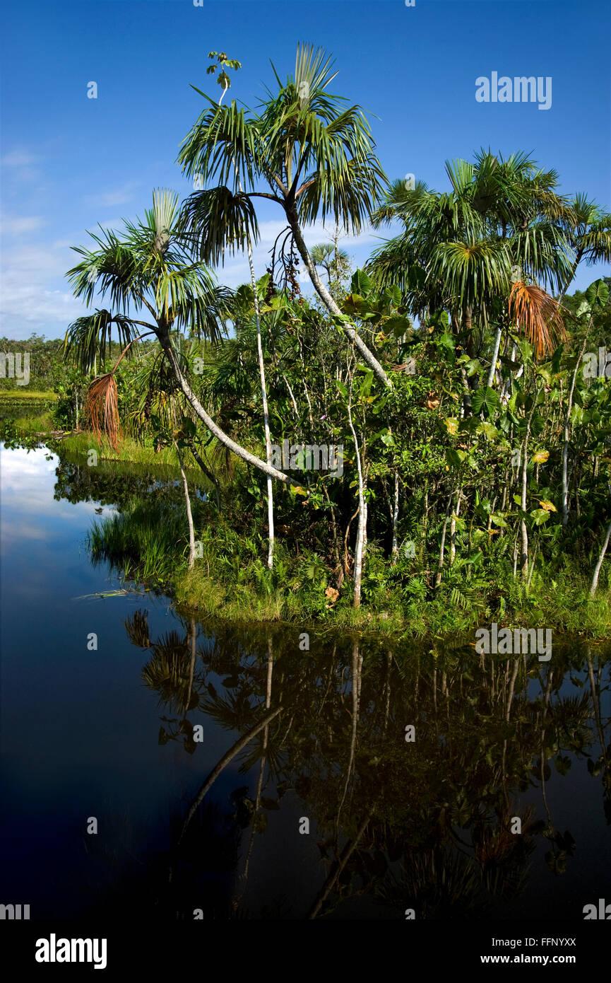 El río Amazonas en Ecuador Imagen De Stock