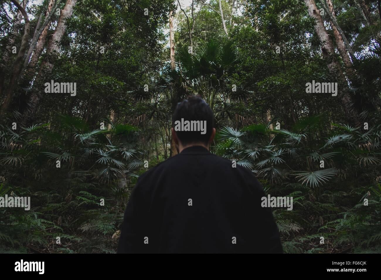 Vista trasera del hombre de pie por los árboles en el bosque Imagen De Stock