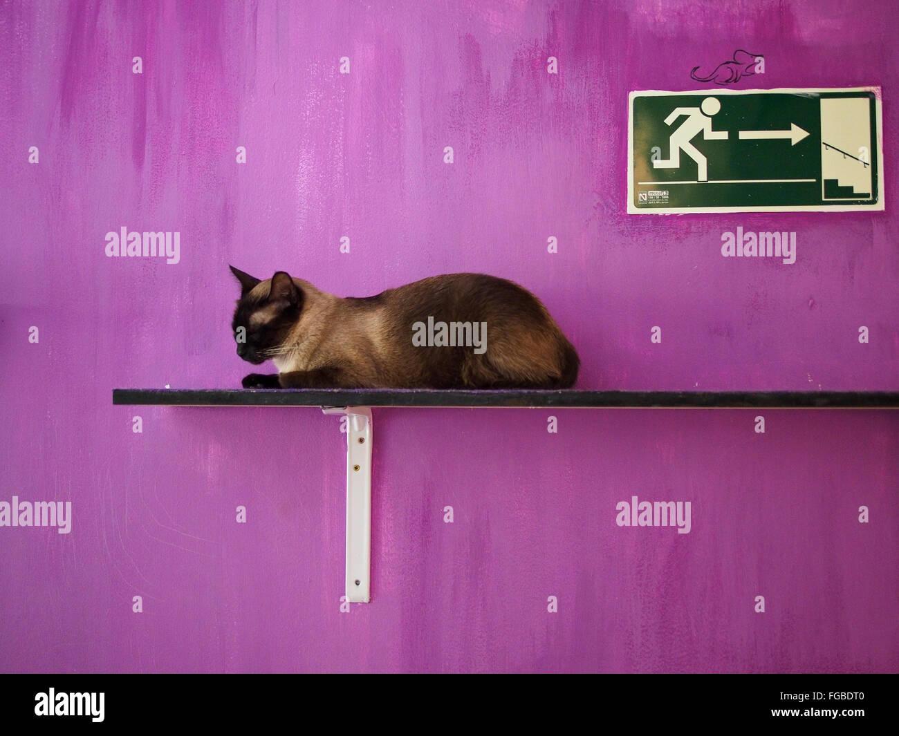 Gato descansando sobre parqué contra pared púrpura Imagen De Stock