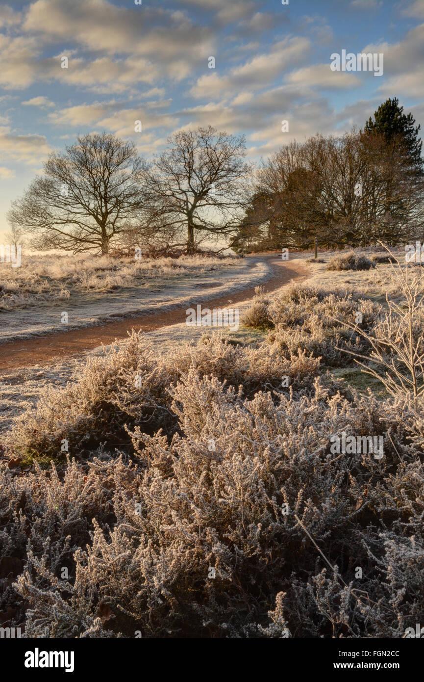 Paisaje invernal en común Puttenham, Surrey, Inglaterra, con heladas, árboles desnudos, cielo azul y nubes Imagen De Stock