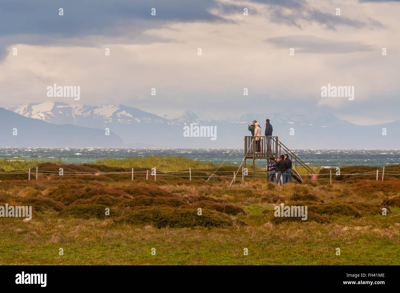 Los turistas que visitan la colonia de pingüinos de Magallanes (Spheniscus magellanicus) en el Seno Otway Imagen De Stock