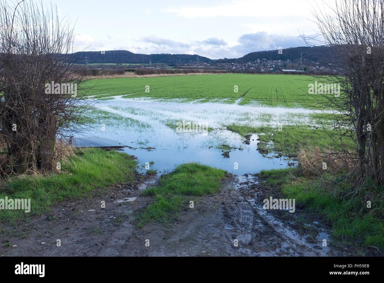 La entrada a un campo de agricultores inundados de agua Imagen De Stock