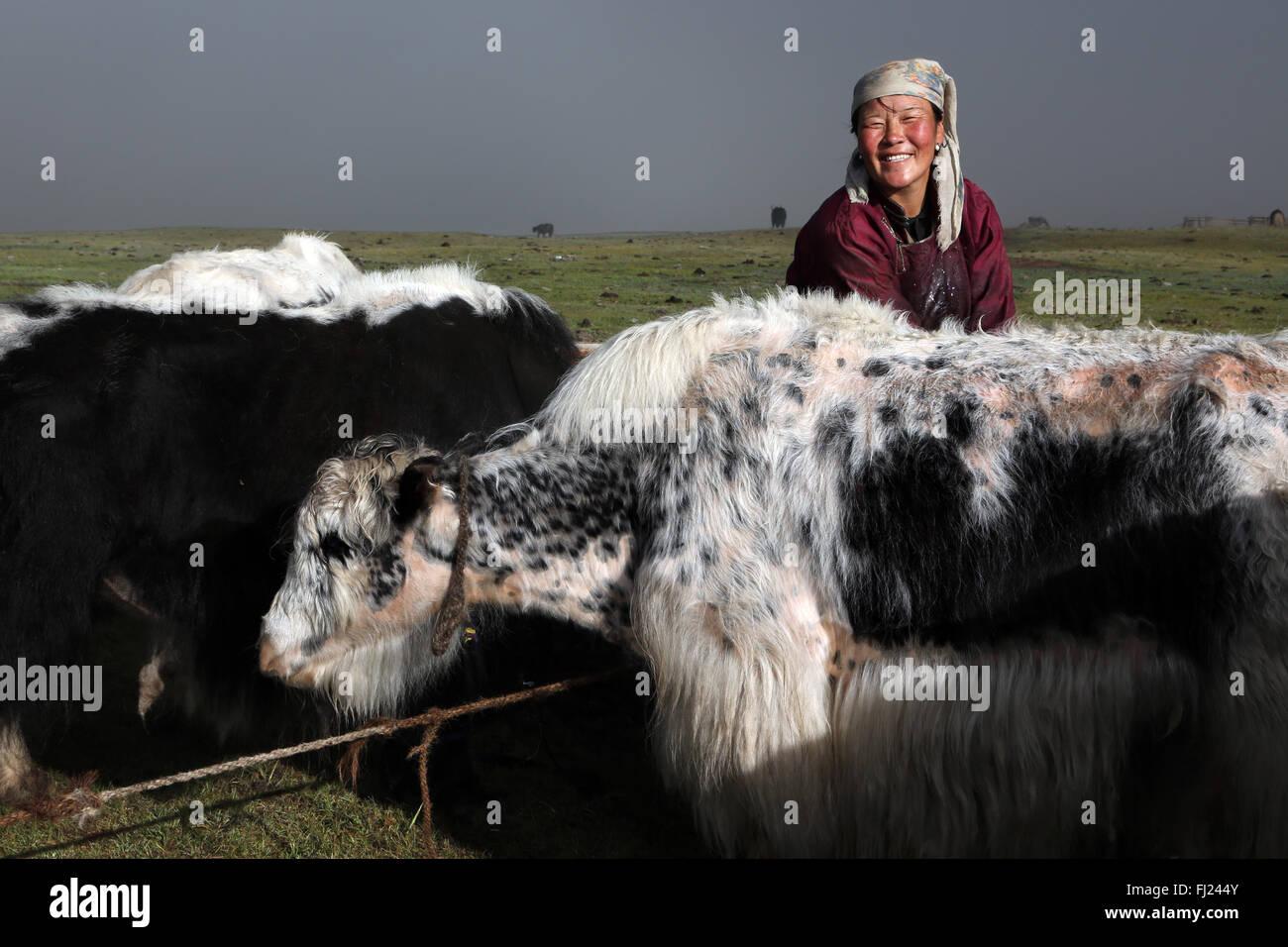Mujer mongola de yaks de ordeño en el campamento de nómadas en Mongolia Imagen De Stock