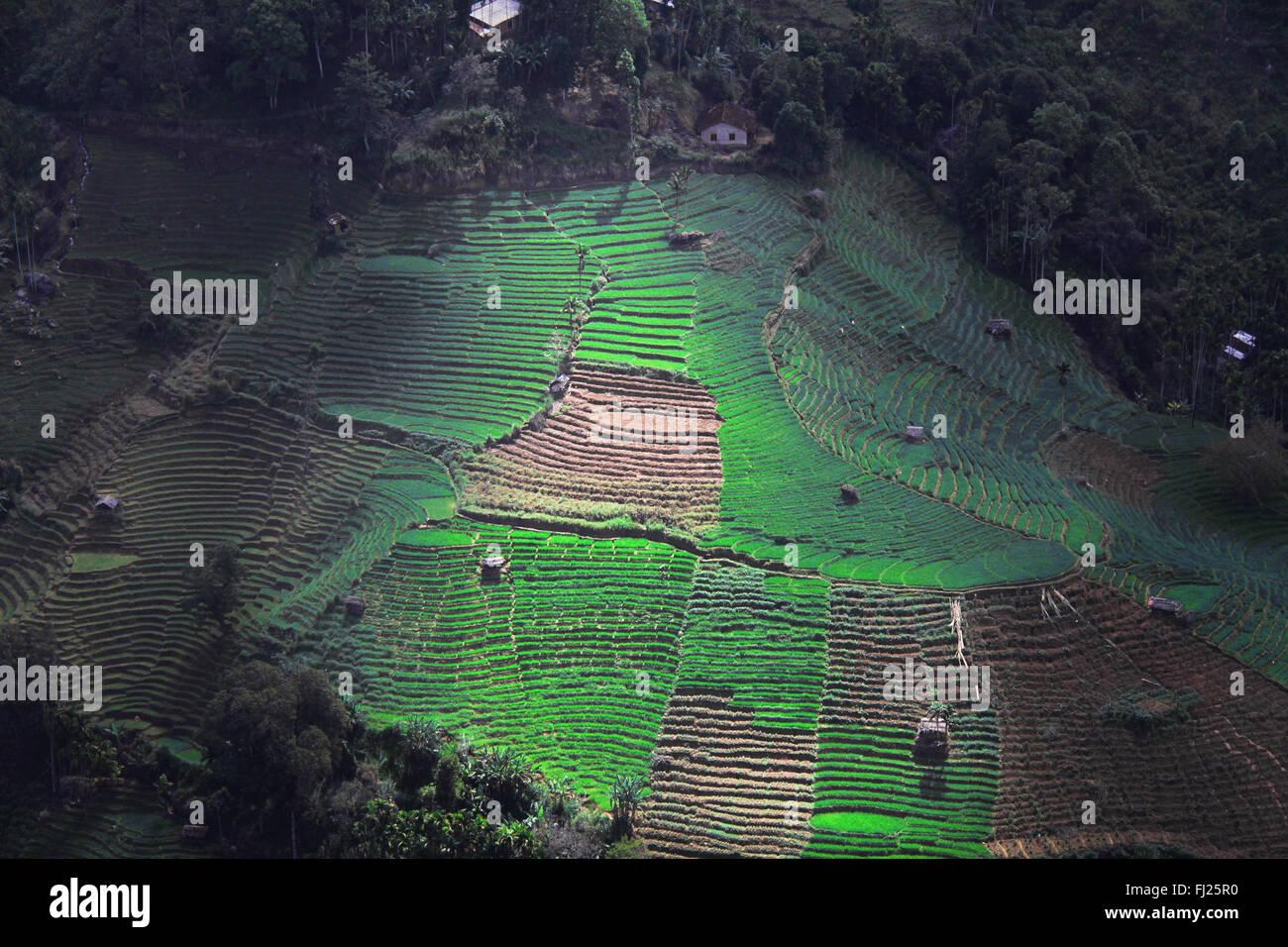 Sri Lanka imágenes de personas y paisajes Imagen De Stock