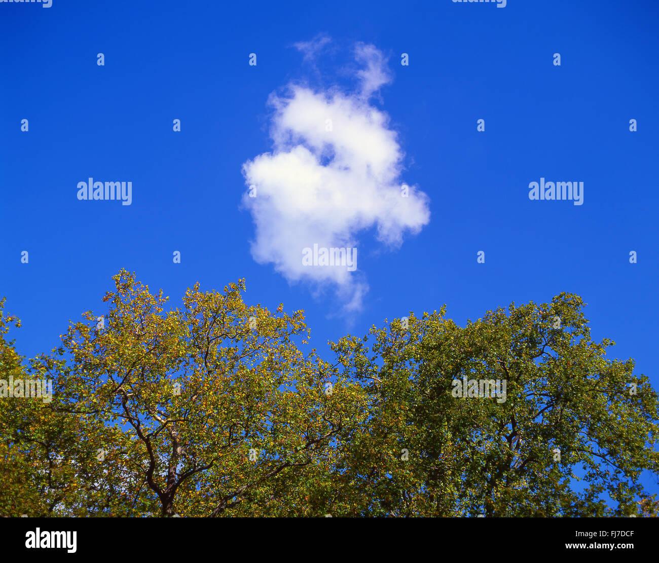 Pequeño, blanco, cúmulos nubosos, cielo azul y hojas de otoño, Virginia Water, Surrey, Inglaterra, Imagen De Stock