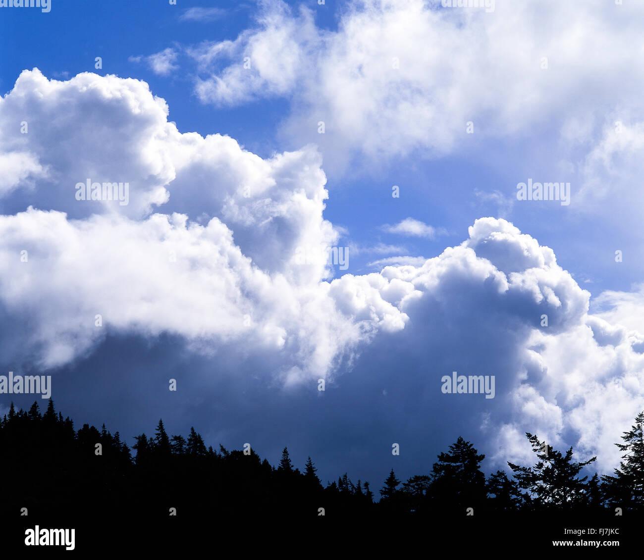 Nubes de tormenta se aproxima, Berkshire, Inglaterra, Reino Unido Imagen De Stock