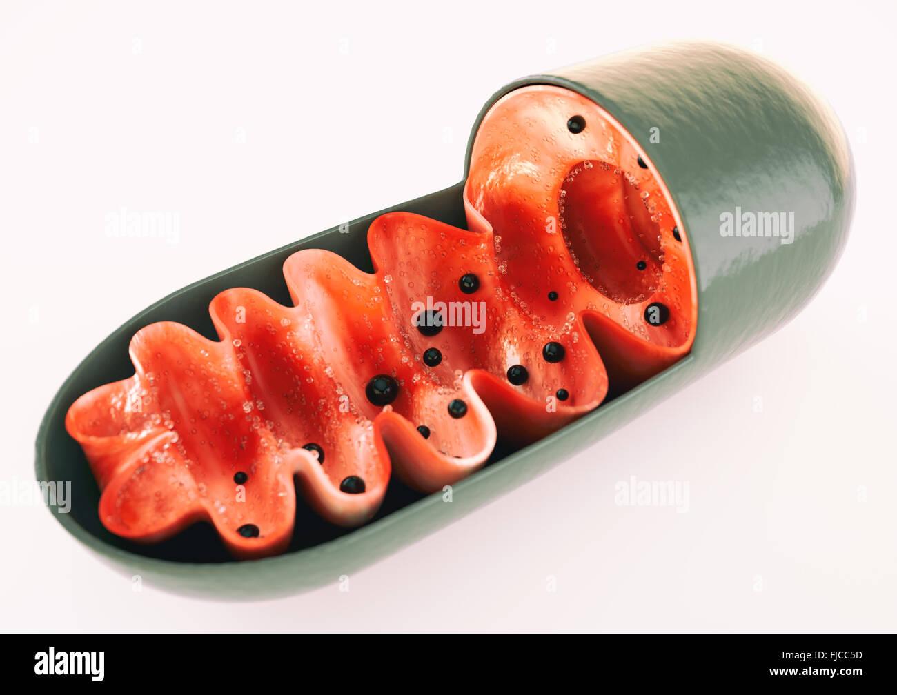 Mitocondrias Foto de stock