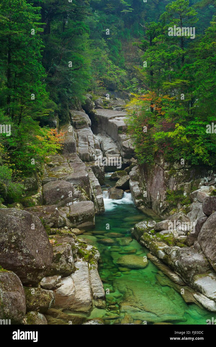 Un río a través de una exuberante selva tropical en el sur de la isla de Yakushima (屋久島), Japón. Foto de stock