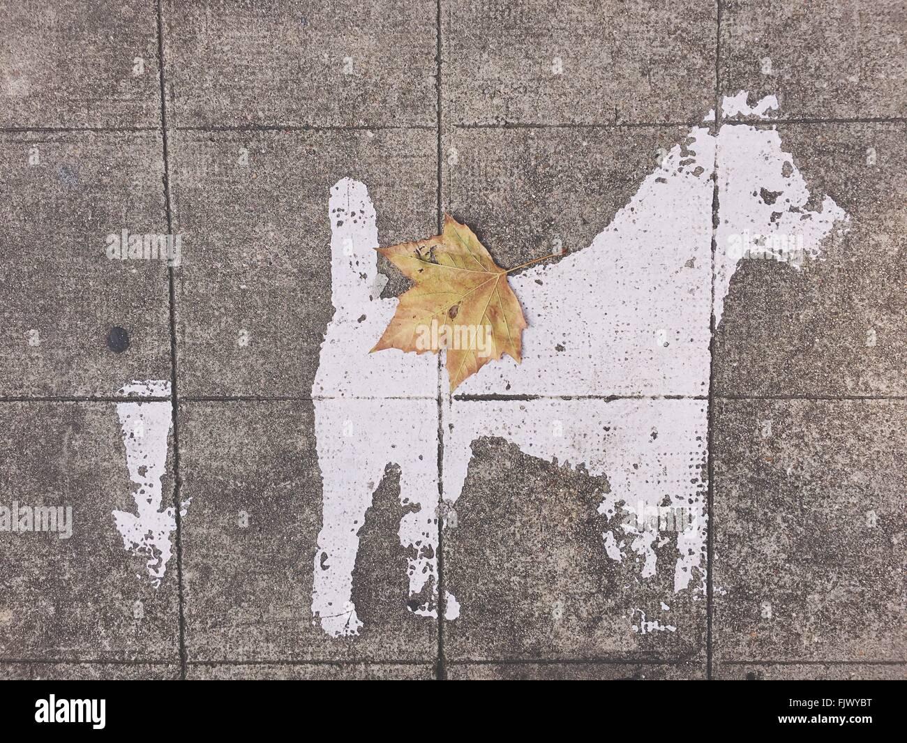 Directamente encima de la vista de perro firmar por el símbolo de flecha sobre la acera Imagen De Stock