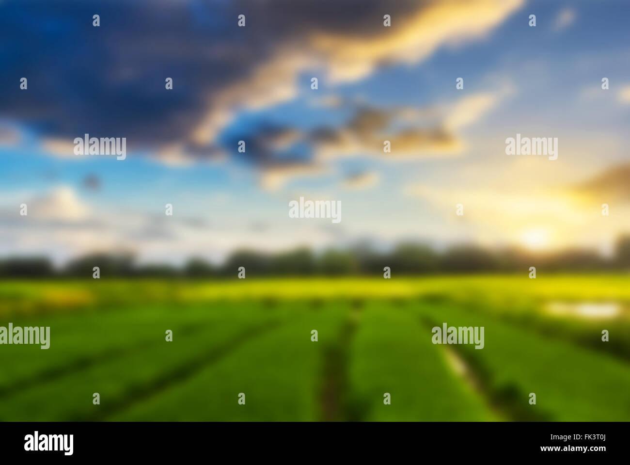 Resumen fondo desenfocado paisaje shot campo de arroz y pasto verde ...