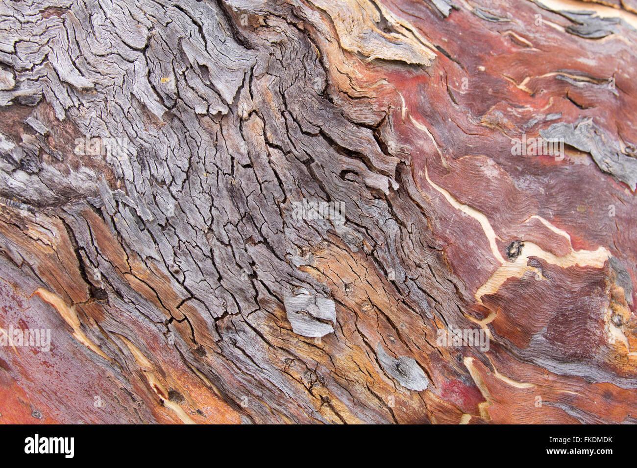 Las texturas de la corteza en la quebrada del Río Murchison en Ross Graham, Kalbarri National Park, en el oeste Imagen De Stock