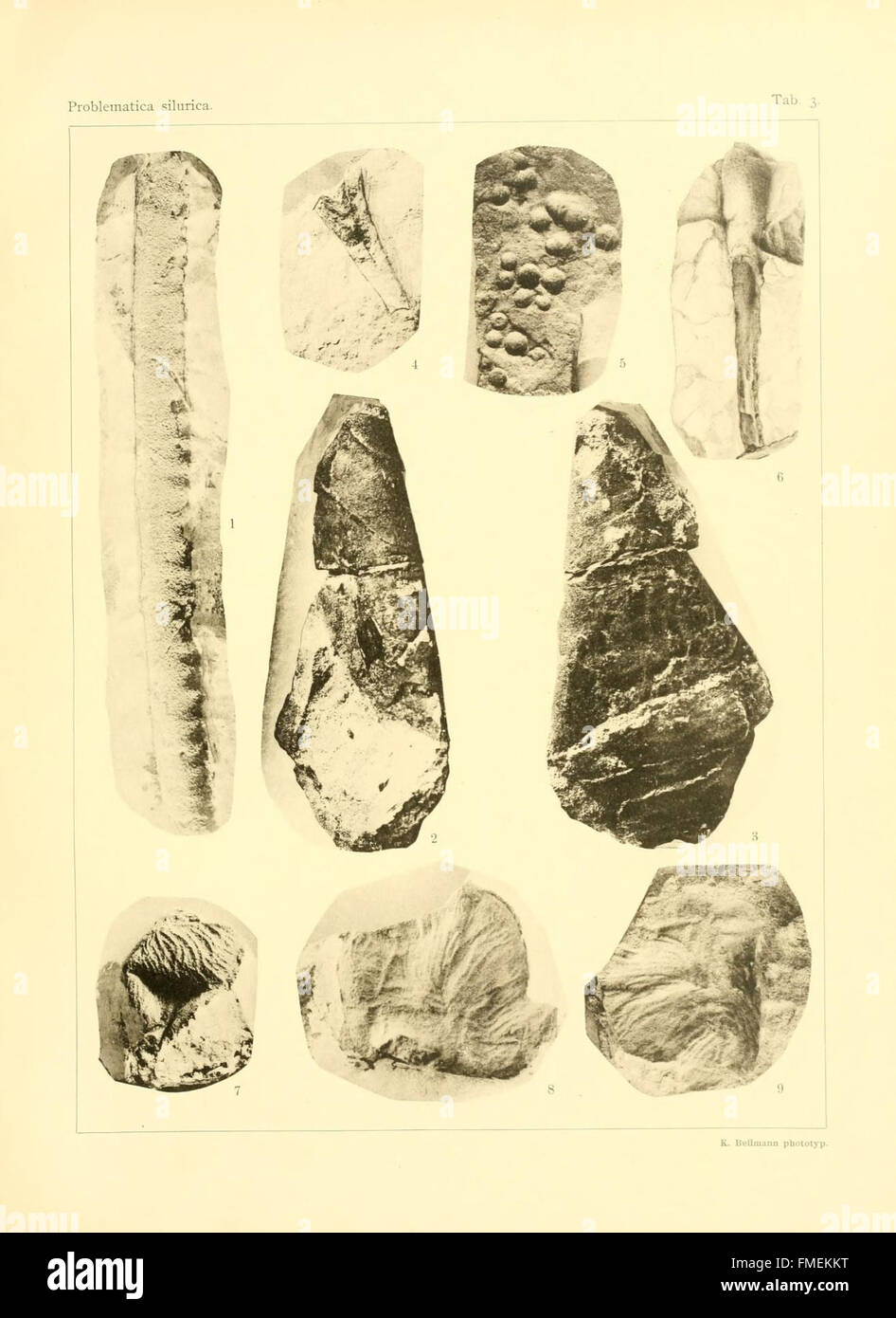 Problematica Silurica (Lámina 3) Foto de stock