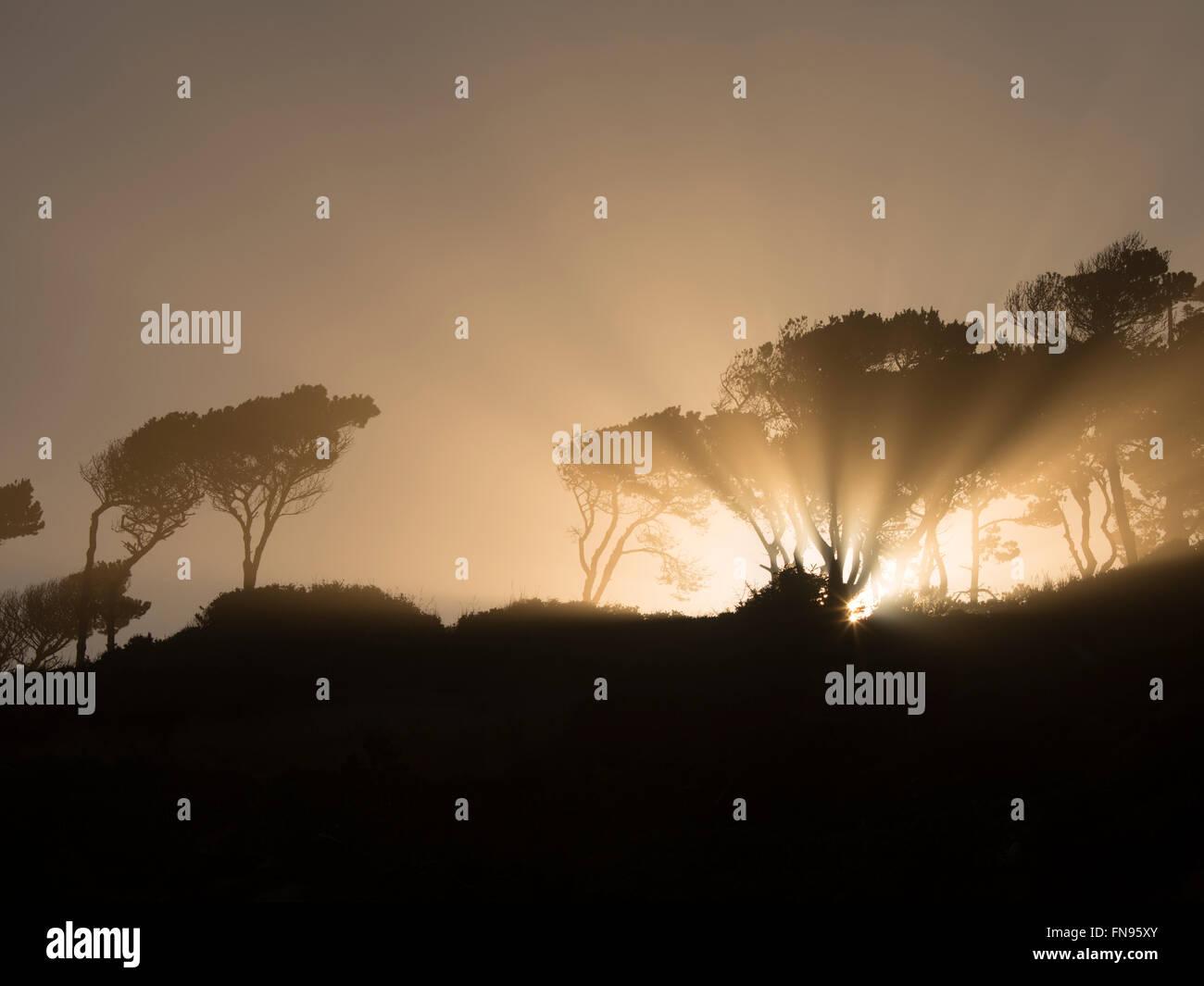 Sunburst al amanecer a través de árboles en Devil's Punchbowl Área Natural del Estado. Oregon Imagen De Stock