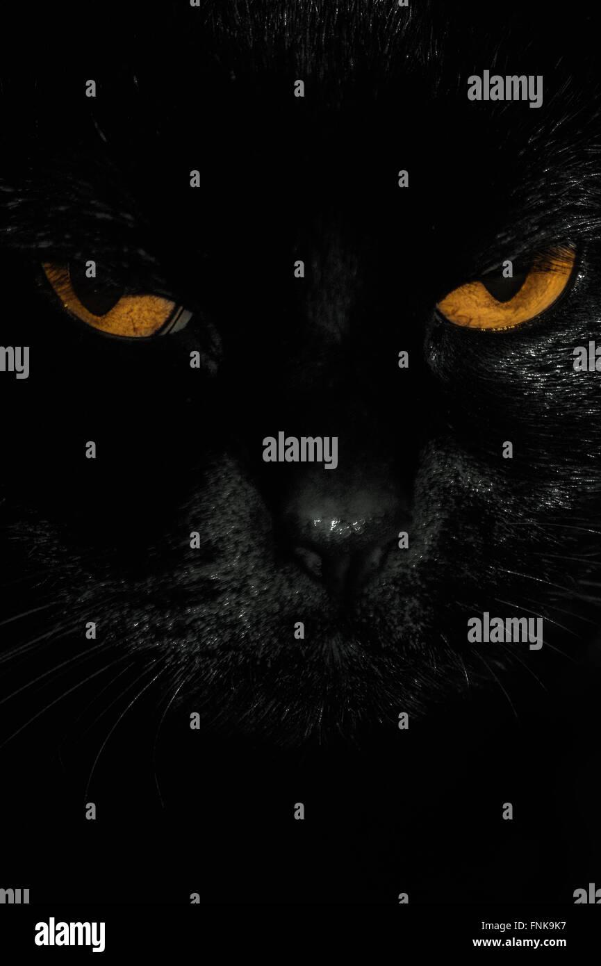 Cerca de los ojos de gato negro Foto de stock