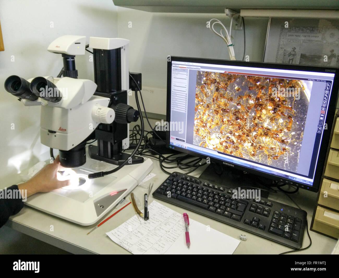 Instituto de Investigación en Biología, la imagen de un microscopio óptico se muestra en una pantalla Imagen De Stock