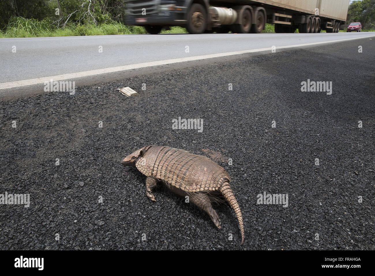Tatu golpear la carretera federal BR-364 Imagen De Stock