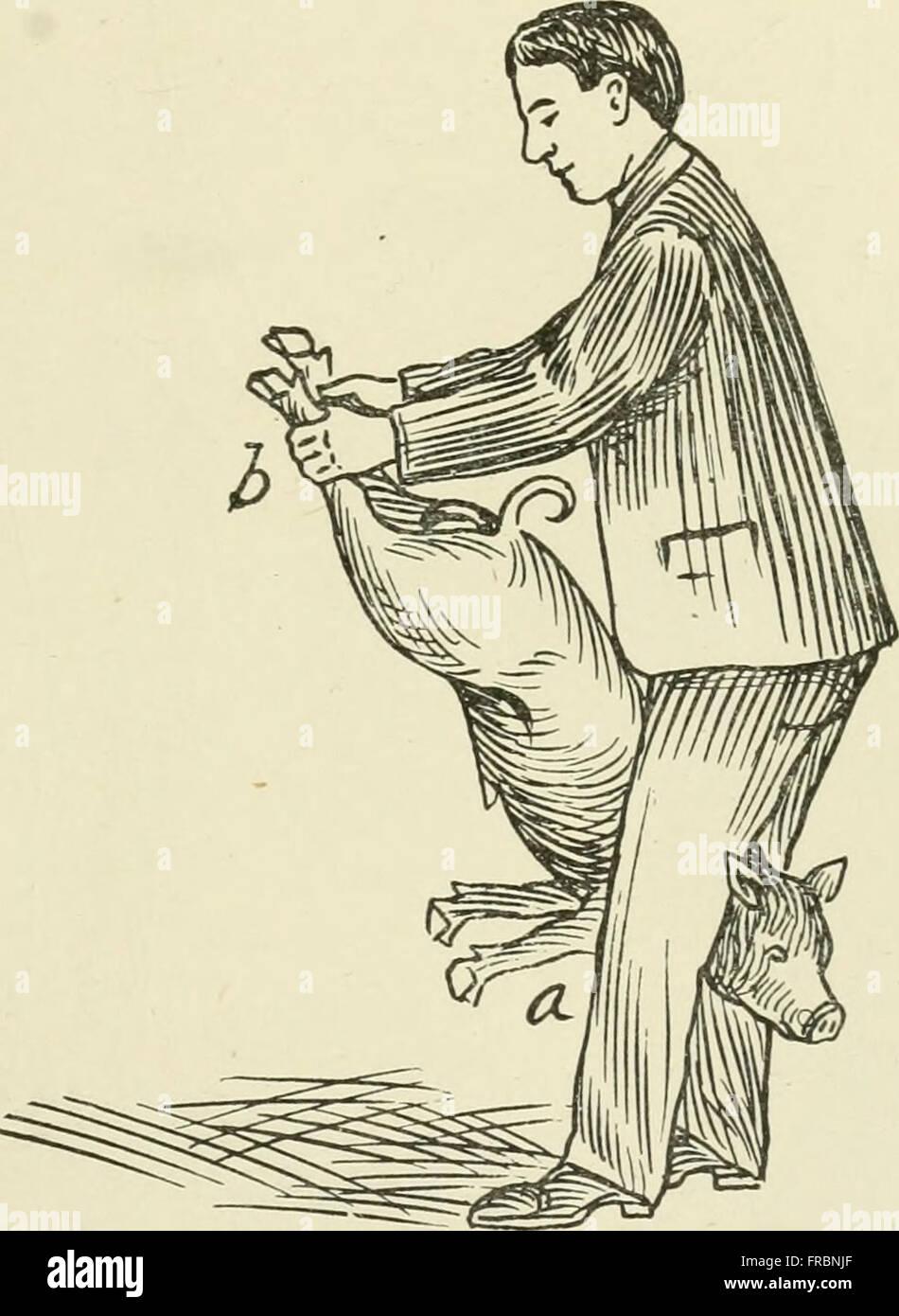 Moderación de animales domésticos; un libro para el uso de estudiantes y practicantes; 312 ilustraciones de dibujos de plumas y 26 medios tonos de las fotografías originales (1909) Foto de stock