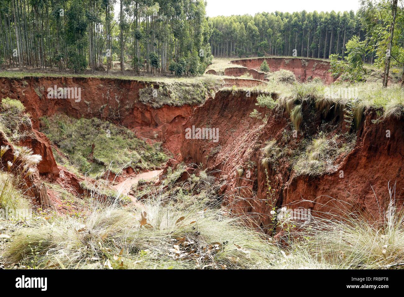 Vossoroca en la zona afectada por el proceso arenization Imagen De Stock