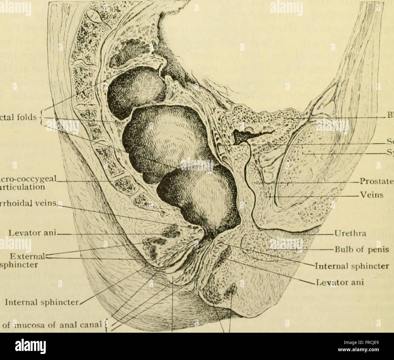 Anatomía Humana, entre ellas la estructura y el desarrollo y las ...