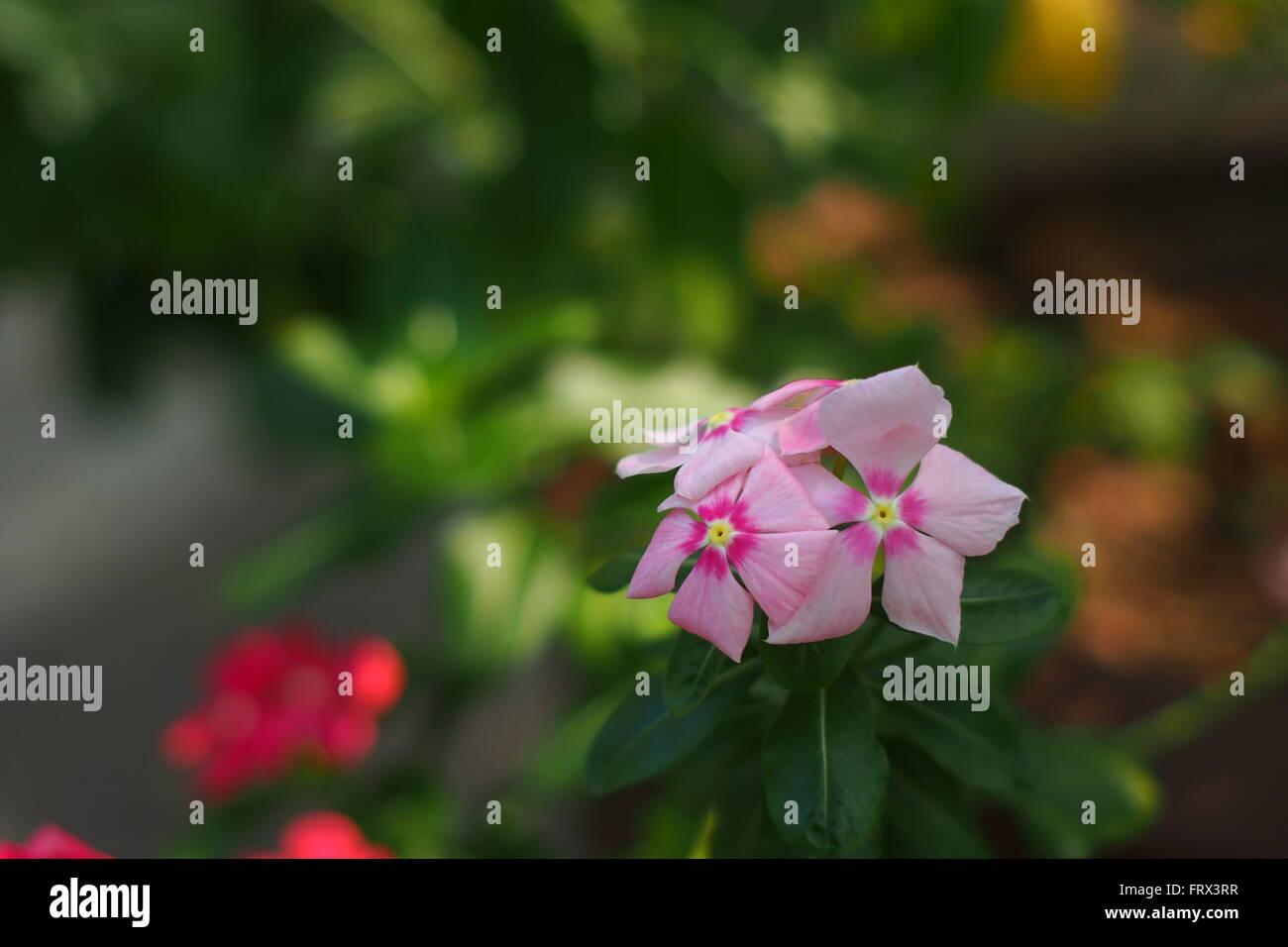 Tri color flor Imagen De Stock