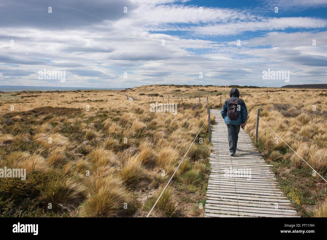 Caminante tras un paseo, Seno Otway, Punta Arenas, Magallanes y de la Antártica Chilena, Patagonia, Chile Imagen De Stock