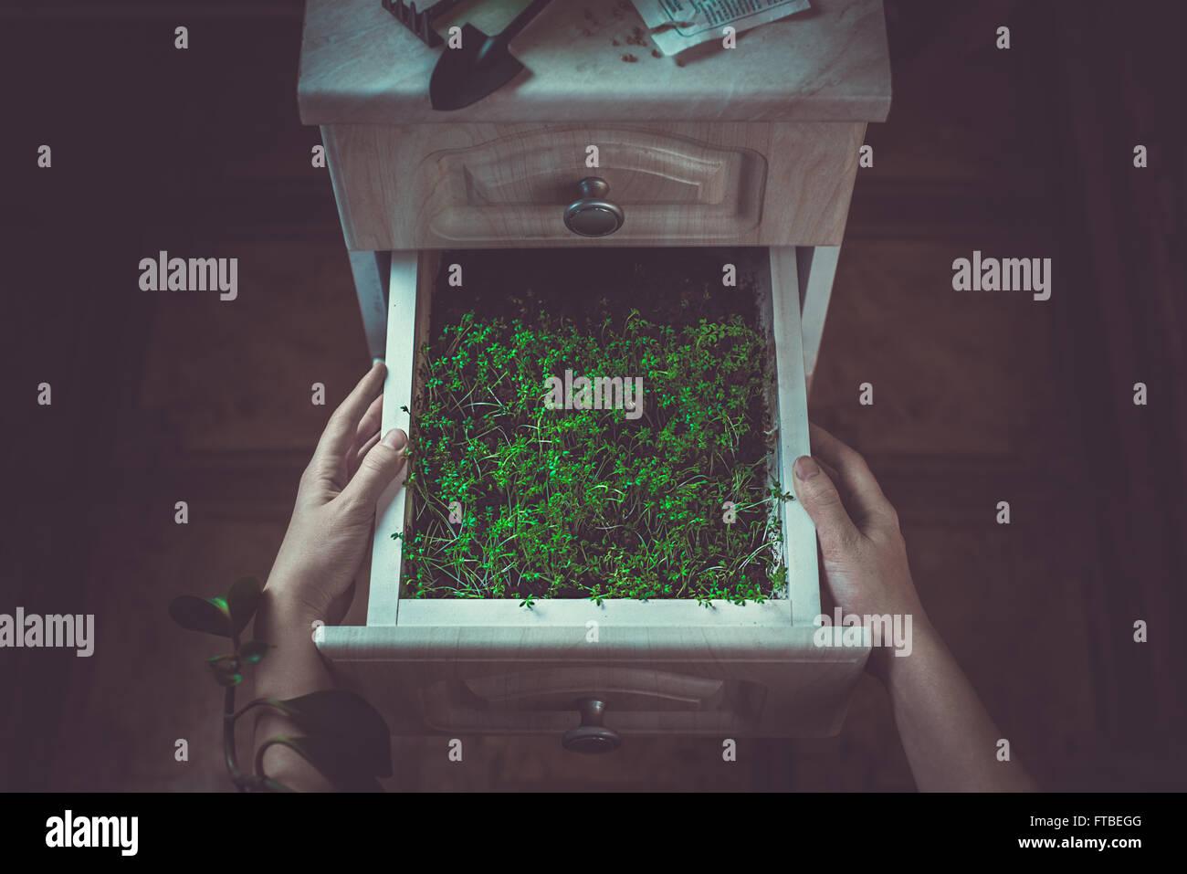 Cajón del jardinero Imagen De Stock