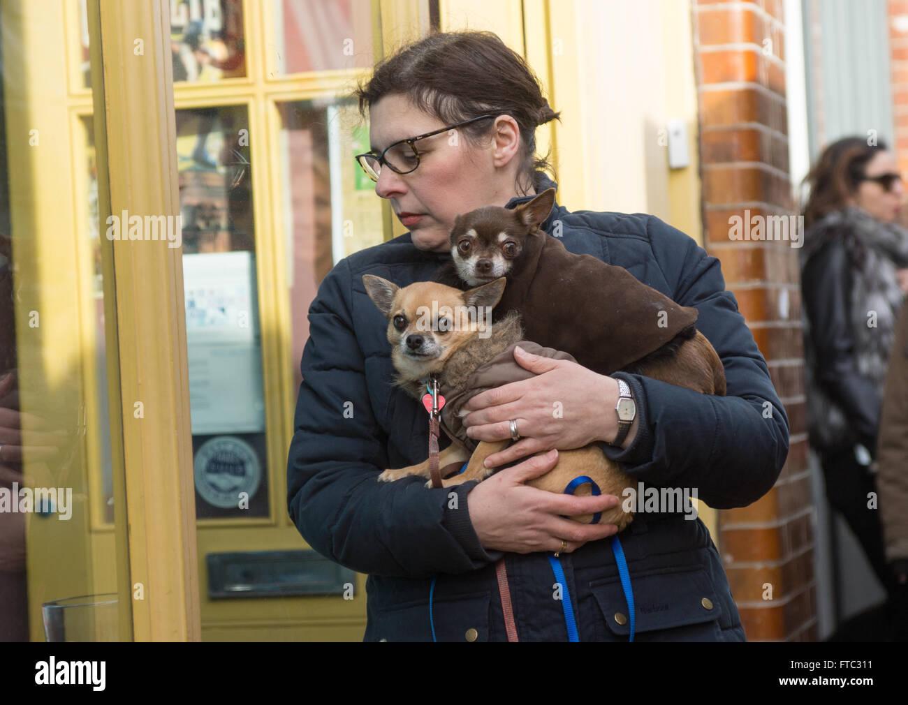 Mujer con perros, hembra propietario de perro, mujer llevar perros Foto de stock
