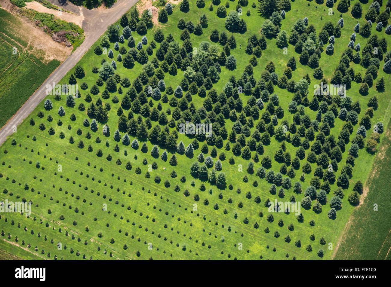 Vista aérea de Tree Farm Foto de stock