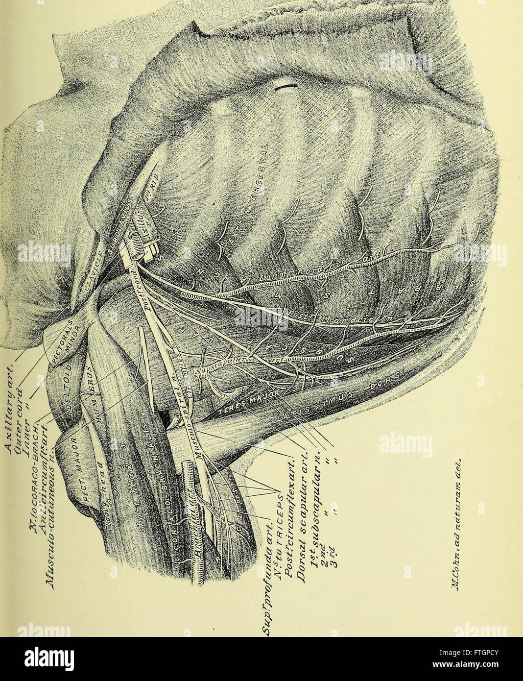 Bonito Anatomía Uña Humana Galería - Ideas de Pintar de Uñas ...