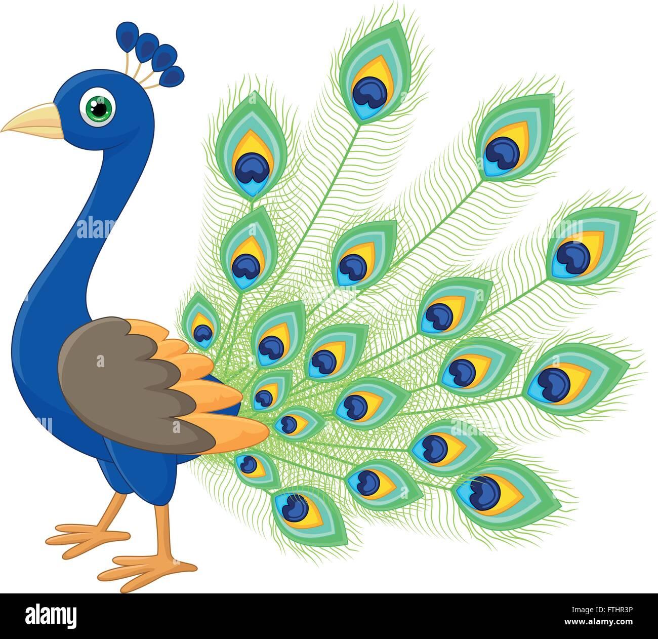 Dibujos De Pavo Real Ilustración Del Vector Imagen 101194906 Alamy