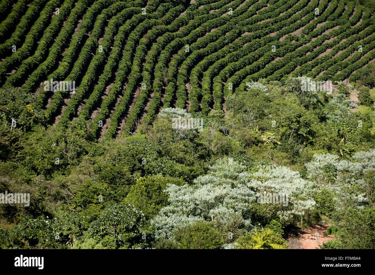 Plantación de café en el municipio rural de Cabo Verde, en el sur de Minas Gerais Imagen De Stock