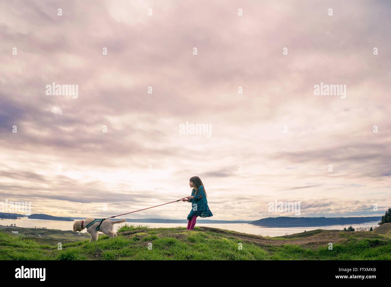 Caminar joven cachorro golden retriever Foto de stock