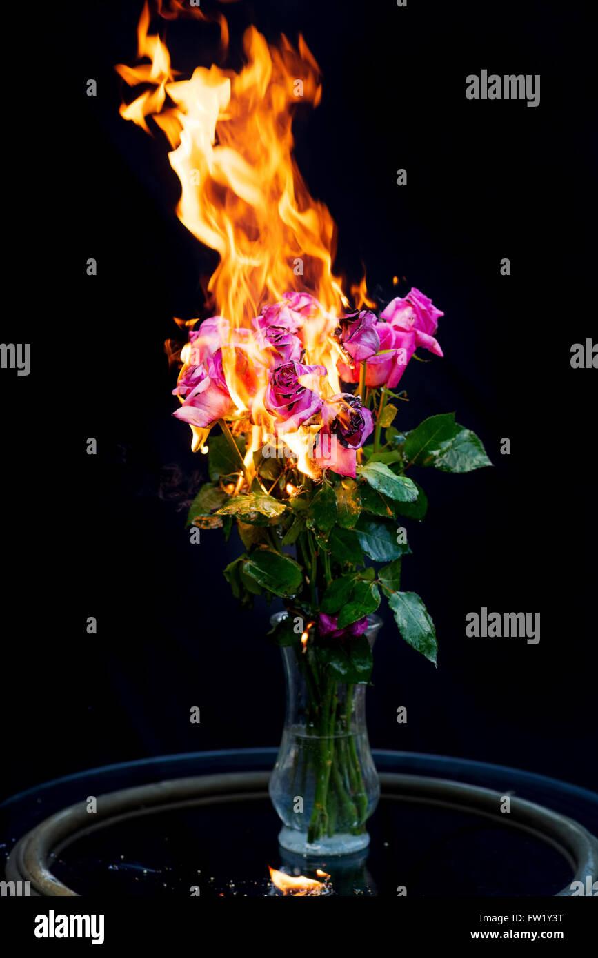 ¡Se acabó! Bouquet de rosas rosas en florero en fuego por concepto de terminar una relación Imagen De Stock