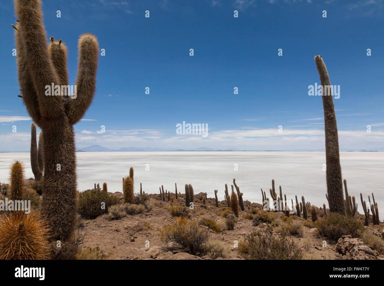 La Isla del Pescado, Salar de Uyuni, Bolivia Imagen De Stock