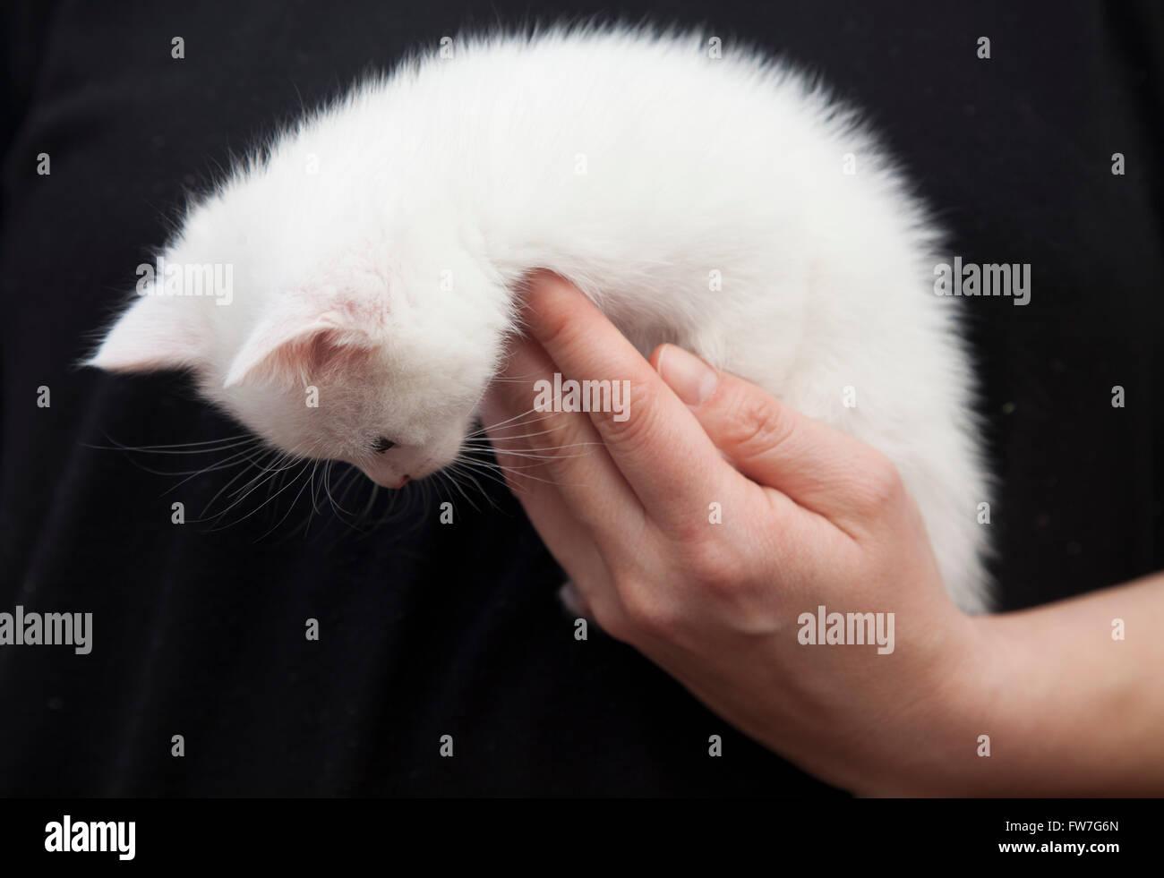 Cat, animales domésticos, tierna, dulce, relajante Imagen De Stock