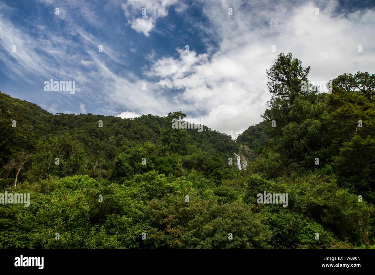 Exuberantes bosques verdes con una cascada en la región de la Costa Oeste de la Isla Sur de Nueva Zelanda Foto de stock