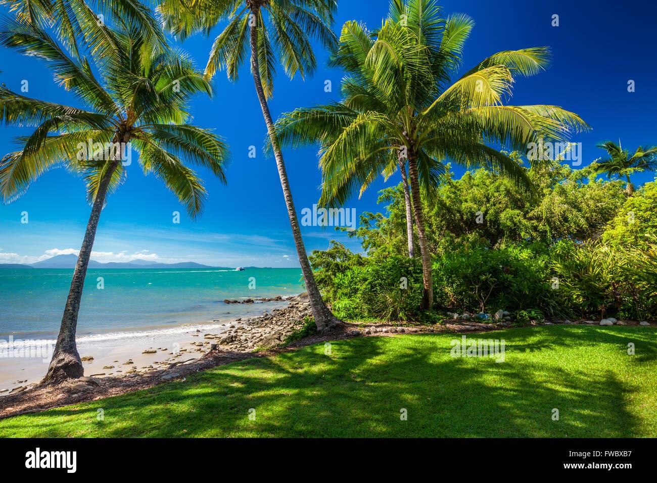Rex Smeal Park en Port Douglas con palmeras tropicales y beach, Australia Imagen De Stock