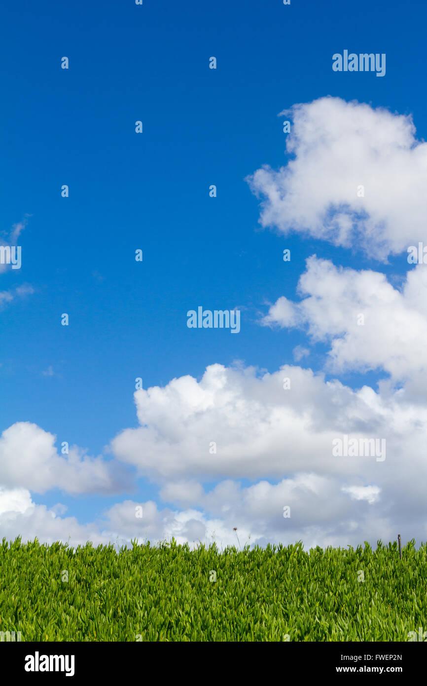 Esta única imagen abstracta muestra una cobertura de vegetación tropical de plantas y algunos a lo largo del cielo azul con nubes. Este es un gran imag Foto de stock