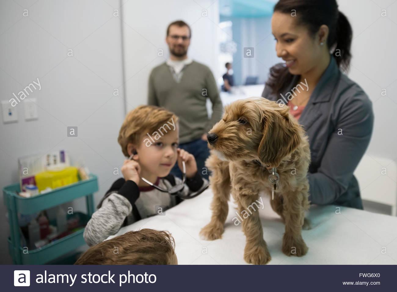 Veterinario y muchacho con estetoscopio examinar perro Imagen De Stock