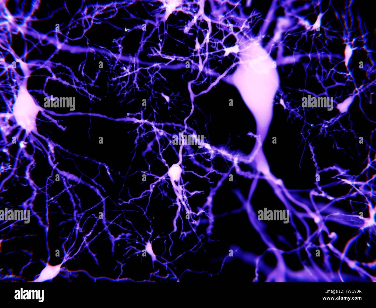 Las neuronas piramidales ilustración de las neuronas piramidales de la corteza cerebral del cerebro las células Imagen De Stock