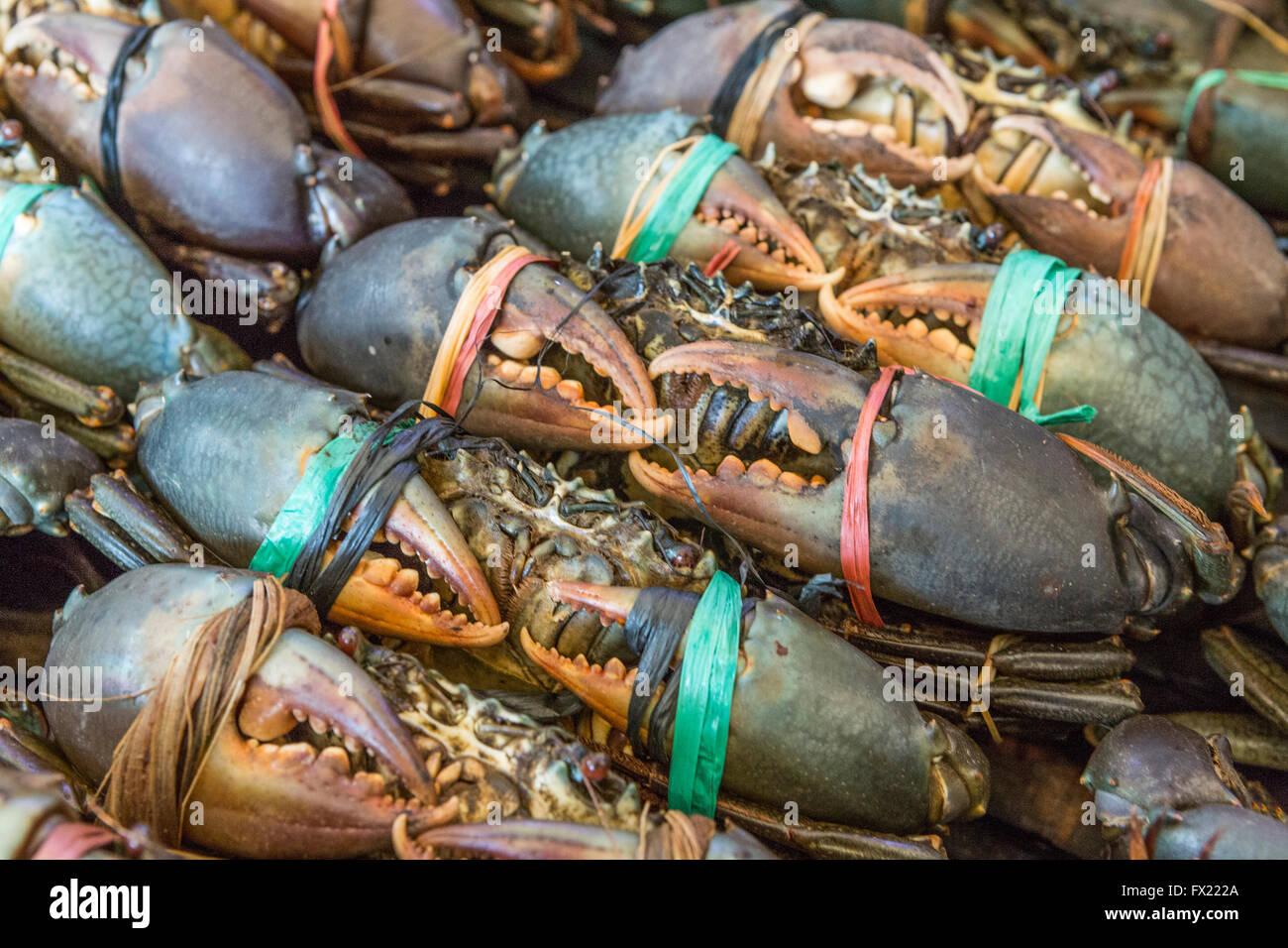 Como Cocinar Cangrejos De Mar | Los Cangrejos De Mar Atadas Con Cuerdas De Plastico En Una Bandeja