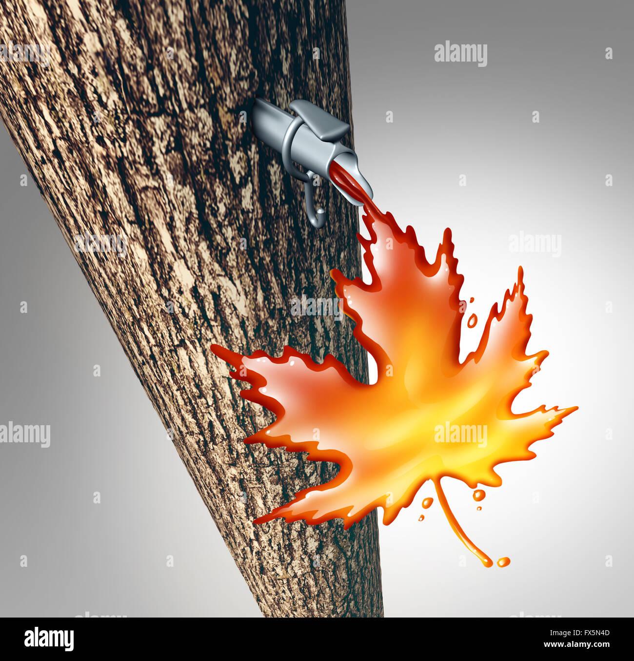 Savia de Arce concepto que fluye como un líquido dulce árbol goteo en forma de jarabe de maple leaf como Imagen De Stock