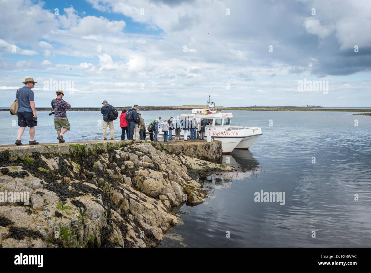 Un viaje en barco a las Islas Farne, Northumberland Imagen De Stock