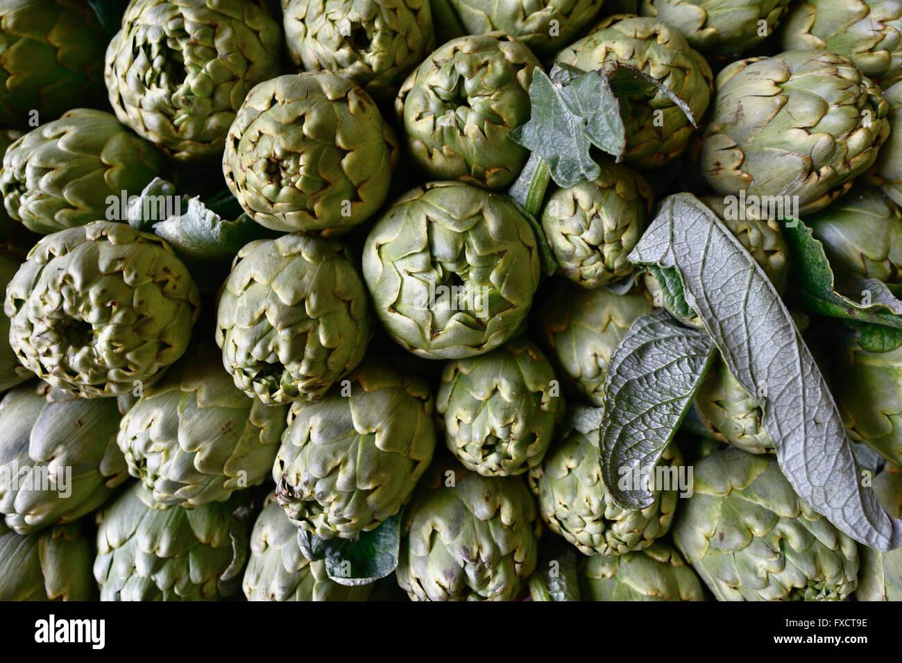 La alcachofa - Cynara cardunculus var. scolymus - es una variedad de una especie de cardo cultivado como alimento. Foto de stock