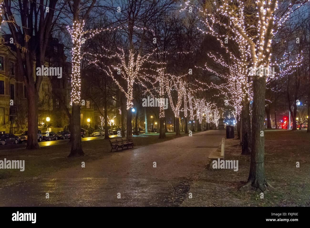 Los árboles iluminados , Commonwealth Avenue, Boston, MA, EE.UU. Imagen De Stock