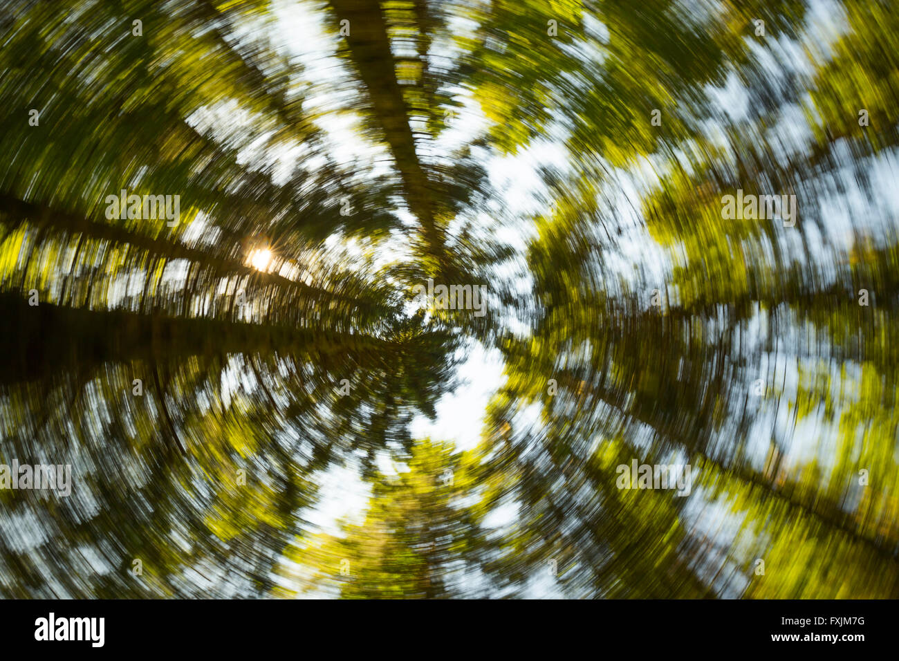 Bosque en movimiento circular hacia arriba árboles sunny borrosa mover mover Imagen De Stock