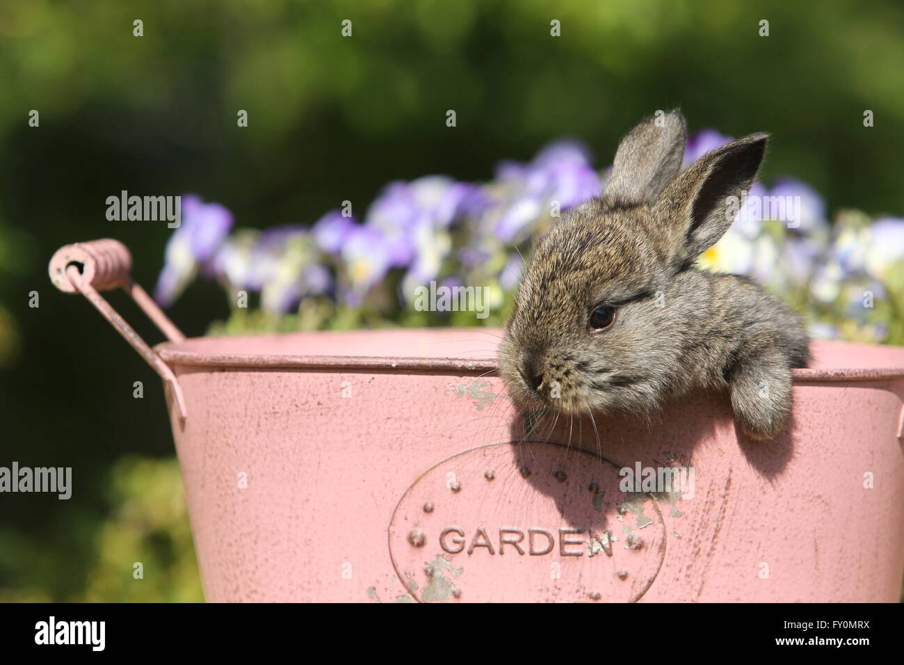 conejo joven Imagen De Stock